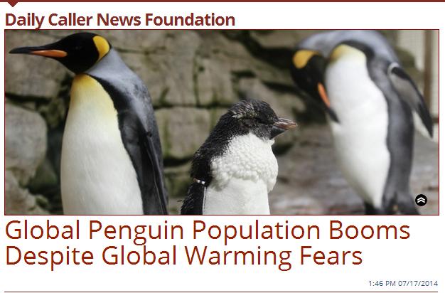 Daily Caller Penguin Headline