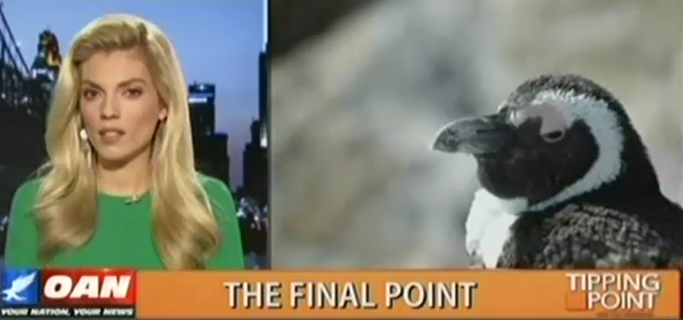 "OANN host Liz Wheeler: ""Transgender penguins"" are a liberal ploy to get Americans to rely on the government"