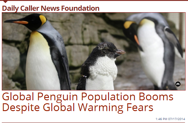 Daily Caller Penguin Headline