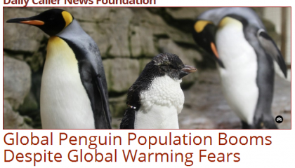 dailycallerpenguinheadline.png